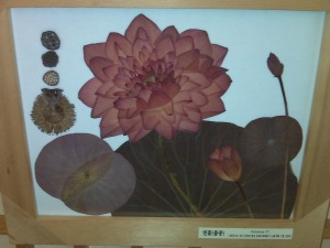 Lovely pressed flower display